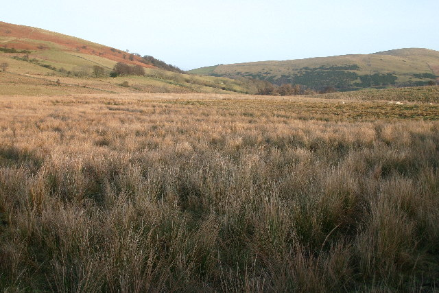 Rough Grazing on Great Mell Fell