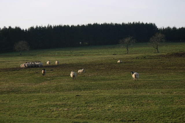 Pasture at entrance to Crookdene