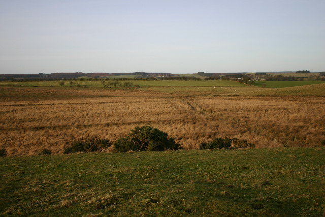 Marshy ground near Three Farms