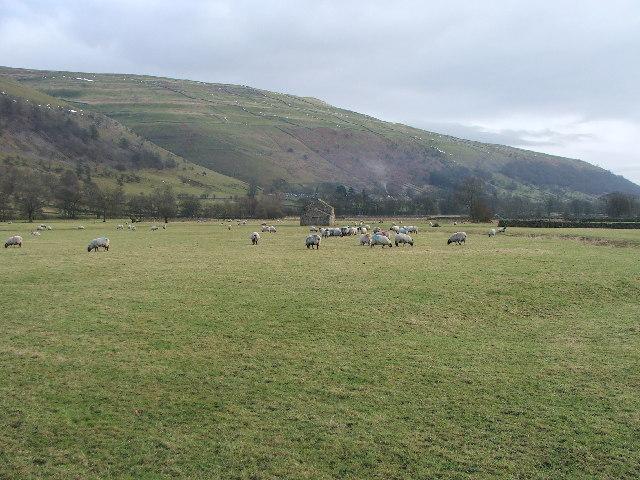 Pasture near Buckden.