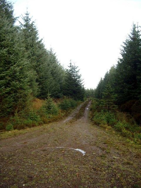 Forestry cul-de-sac