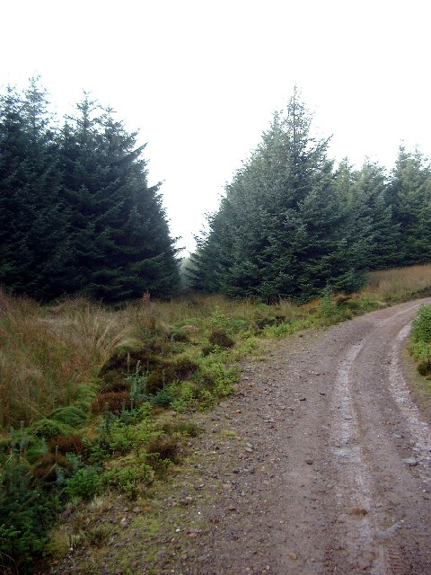 Forest track and firebreak in Dungavel Forest
