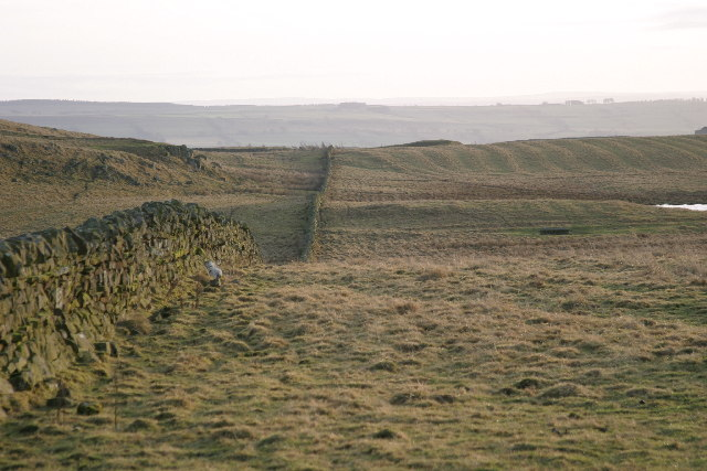 Rough pasture south from Thockrington