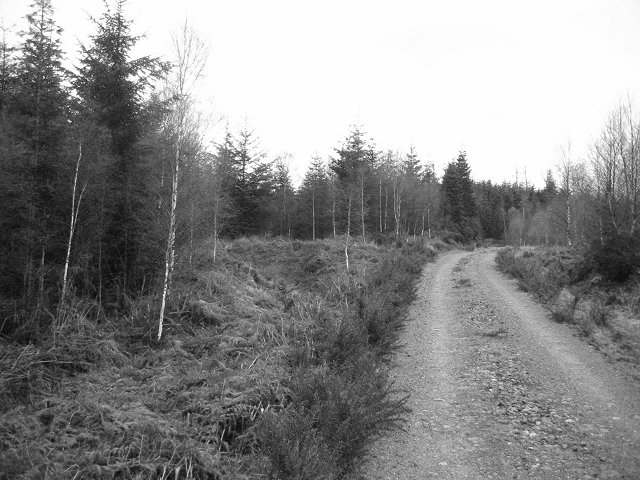 Auchteraw Woods