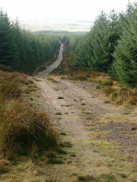 Long forest track below Dungavel Hill