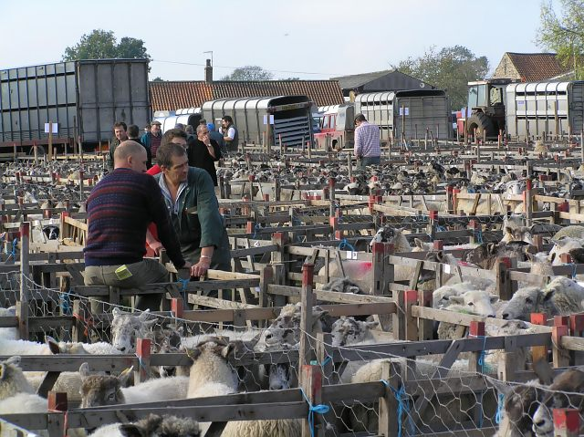 Sheep sale at Fadmoor
