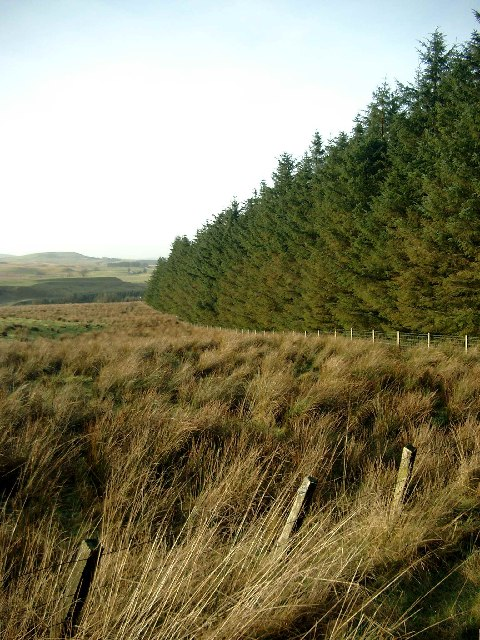 Forestry to the west of B743