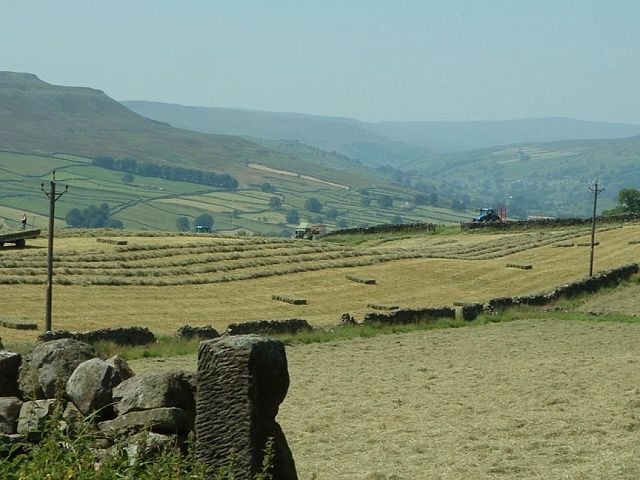 Hayfield on the edge of Swaledale