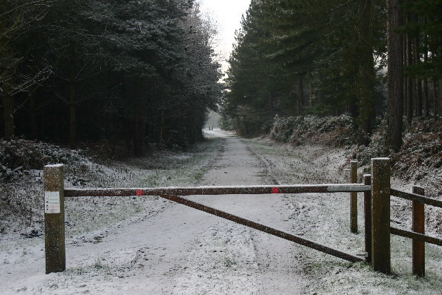 Entrance to Wheldrake Wood