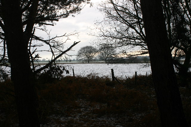 Farmland from the edge of Wheldrake Wood