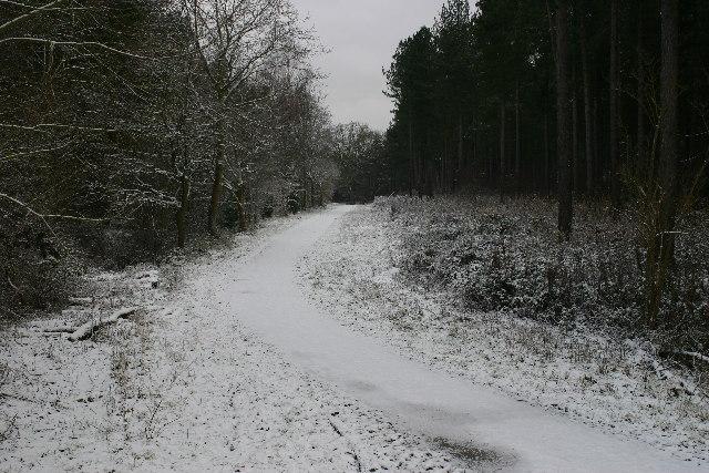 Track in Wheldrake Wood