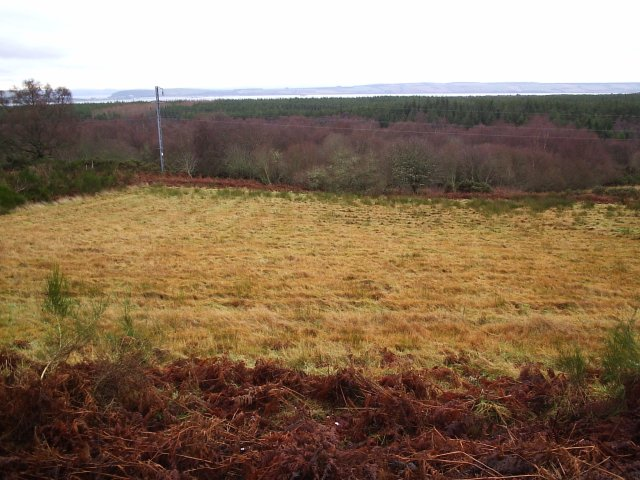 Looking over the Wilderness Wood Towards Invergordon
