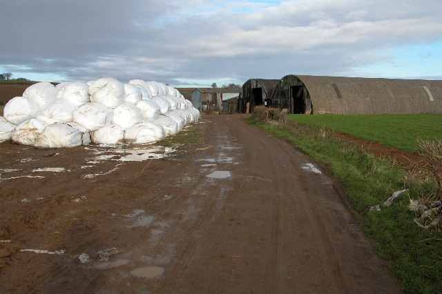 Silage bales on Nash's Lane, near Ebrington