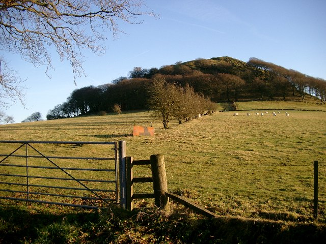 Sheep grazing on the slopes of Loudoun Hill