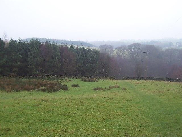 Low Scargill Plantation