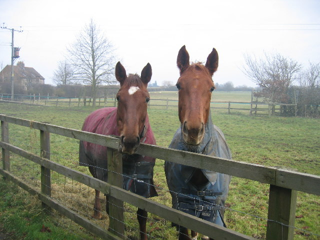 Horses at Butlers Marston