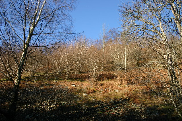 Old Coppice, Swinburn's Park