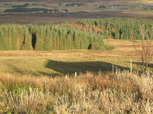 Woodland at Uigshadder