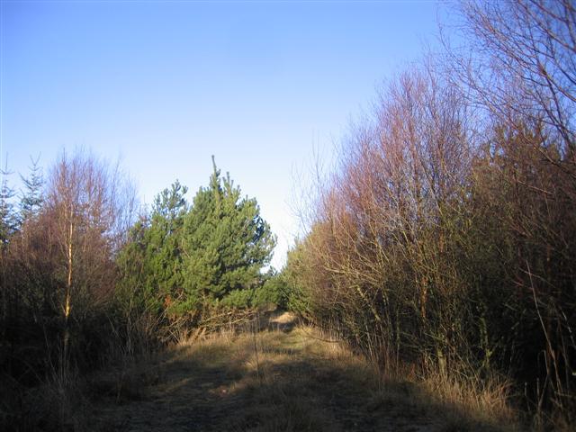 Greystoke Moor Forest Track.