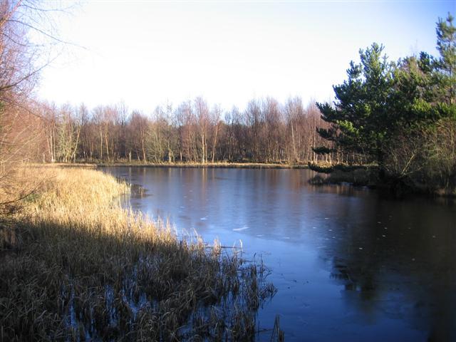 Greystoke Moor Duck Pond.