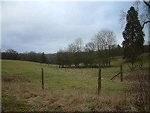 SU3254 : Conholt Park by Colin Bates