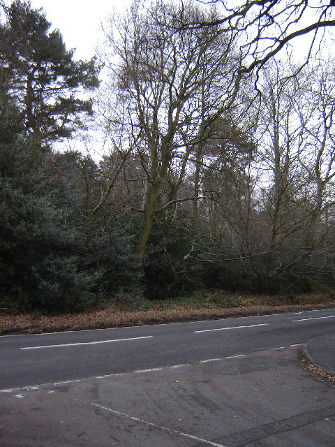 Woods on Jackpond Hill, Near Frimley