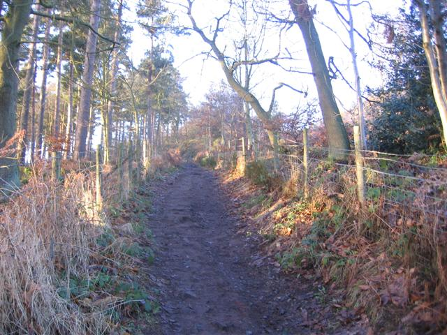 The woodland path to the summit.