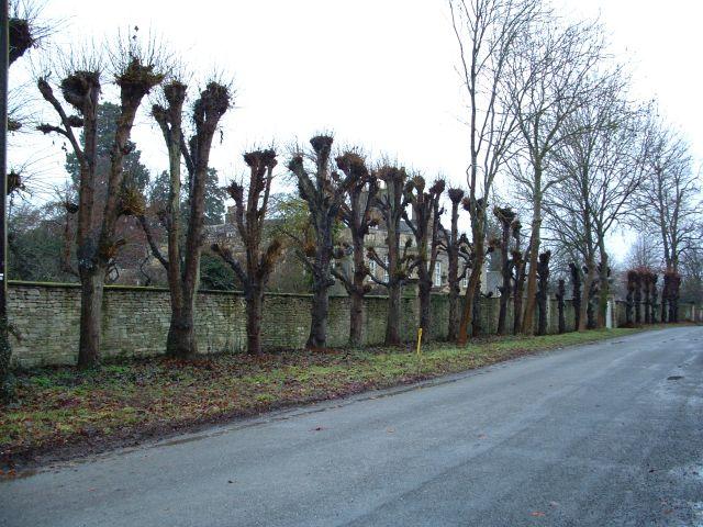 Bampton Treeline