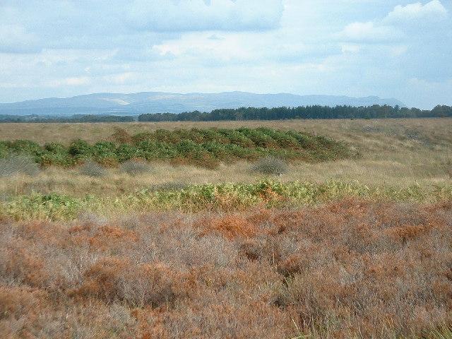 High Moss Pow, mid-reaches, Flanders Moss
