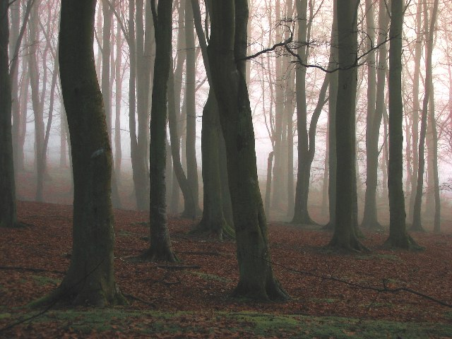 Woodland Mist