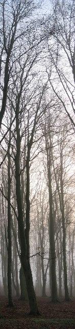 Trees Langedge Wood