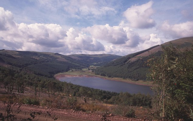 Talybont Forest