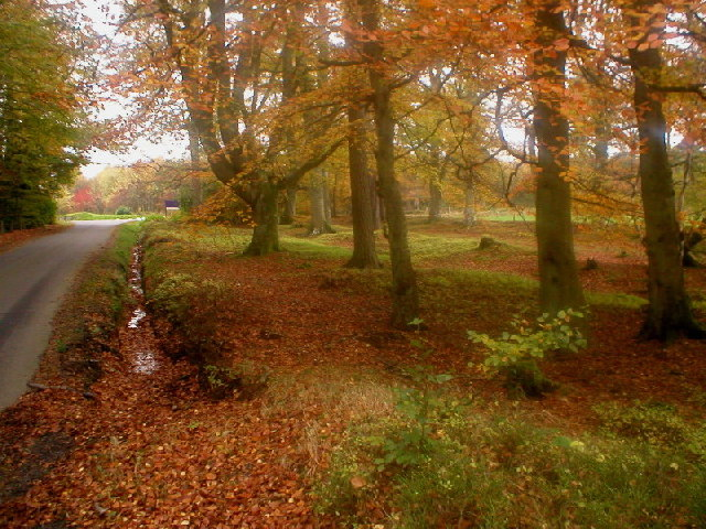 Drum Castle woods in Autumn
