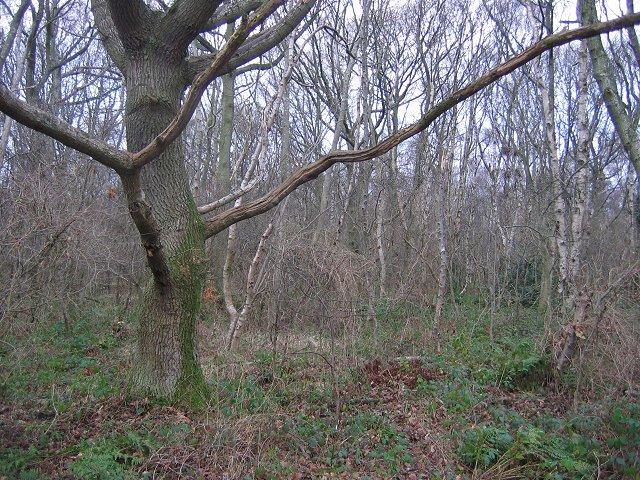 Cuddie Wood.