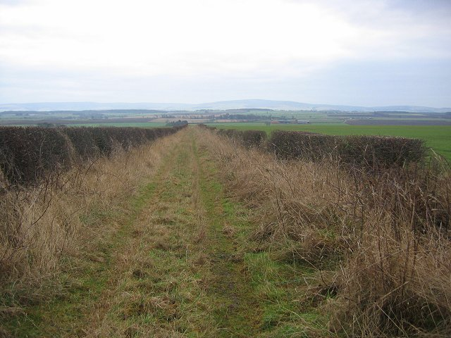 Track to West Mains.