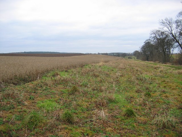 Field margin, Kirklands.