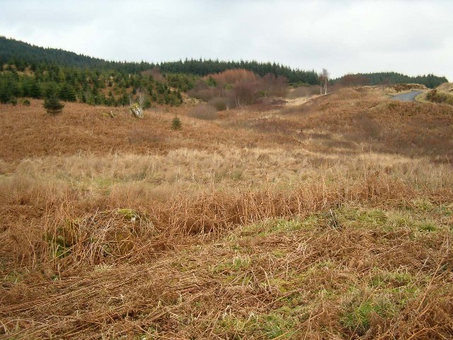 New forestry near Achrihamish