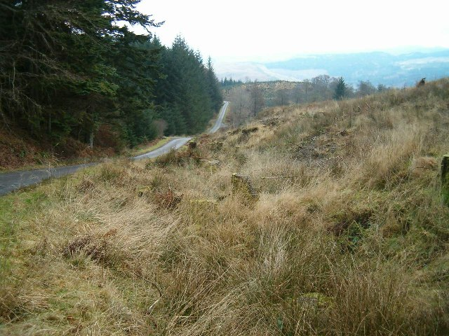 Road through Inverliever Forest