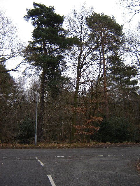 Woods Next to St Catherines Road, Frimley
