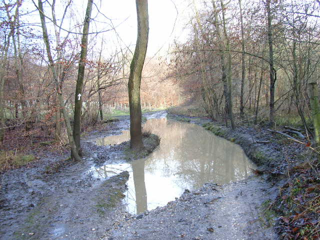 Puddle in Moor Wood