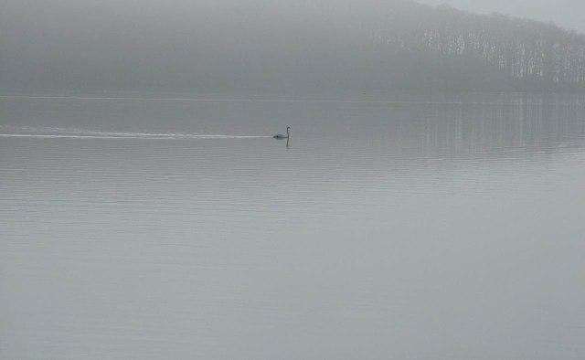 Peaceful evening on Loch Lomond