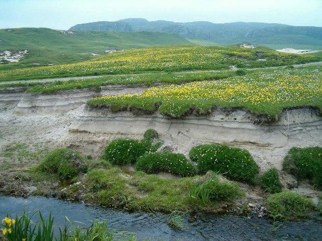 Machir (spring flowers) on the dunes at Machir Bay
