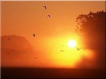 TF3463 : Sunrise over Keal Plantation by Dave Hitchborne