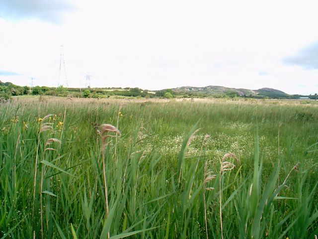Bog near Bryn Mwcog