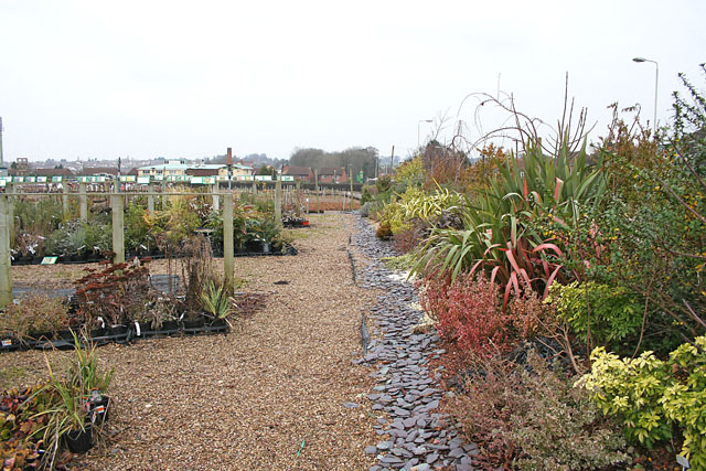 James Coles Plant Nursery, Thurnby, Leicester