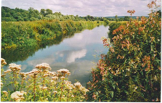 River Wey, near Send