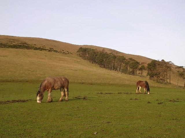 Pair of Horses, Howslack Farm