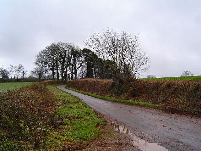 Lane near Windmill Down, Totnes