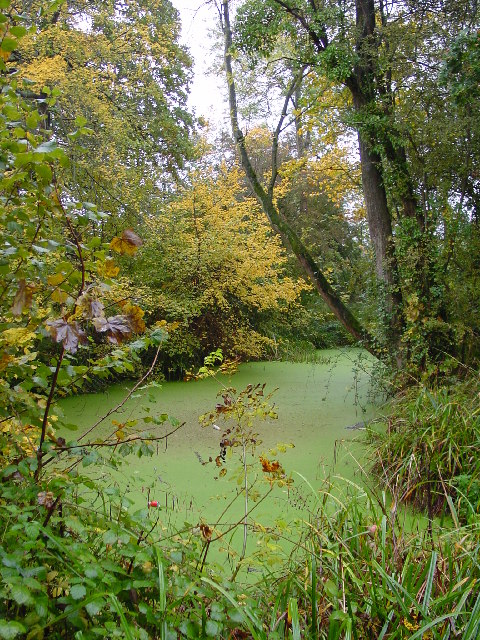 Mediaeval Fishponds - Park Farm, Thornbury