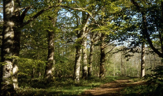 Orchardleigh Wood